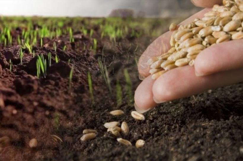 Стан посівів озимих культур під урожай 2020 року